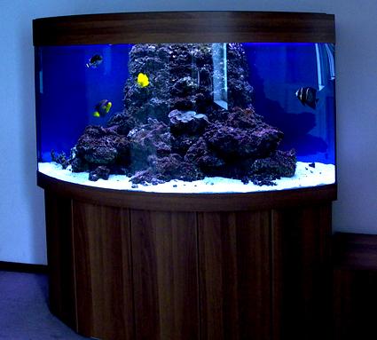 а так же в предоставлении услуг по обслуживанию аквариумов