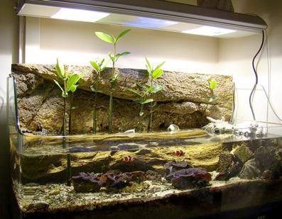 морской аквариум слабая лампа какие проблемы Паук это знаменитая